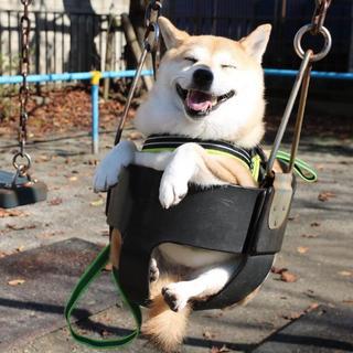 Такими крутыми фотографиями может гордиться любая собака!