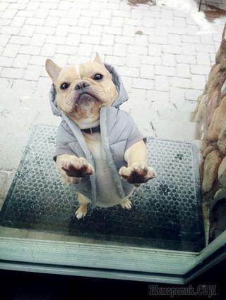25 домашних животных, которые должны попасть внутрь прямо сейчас