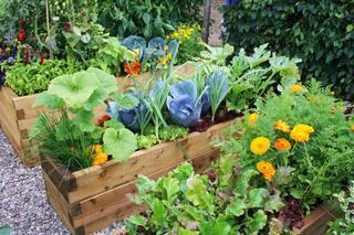 Самые опасные инфекционные болезни садово-огородных культур