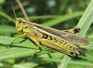 Топ 10 самых быстрых насекомых в мире