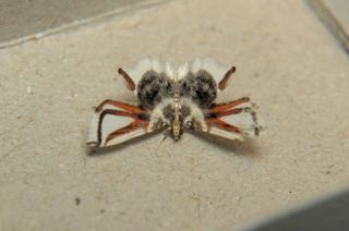 Не тот костюм: насекомые, которые выглядят точь-в-точь как нечто другое