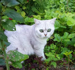 15 растений, которых стоит избегать, если у вас есть домашний питомец