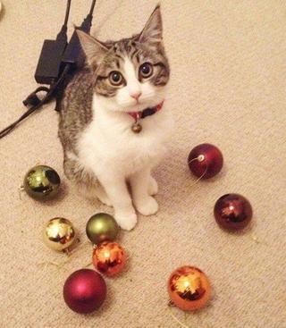 Коллекции вещей, украденные кошками