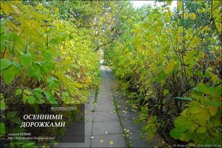 Фотопрогулка.  Осенними дорожками