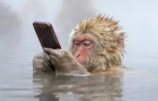 Джигокудани - парк снежных обезьян, Япония
