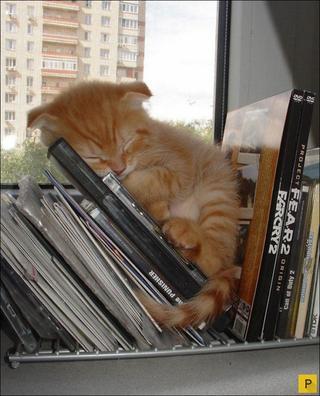 Что снится кошкам?