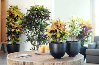 Цветы для кухни: выбор вида и правила размещения