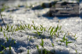 Фотопрогулки.  Первый снег