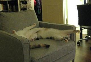 Кошки-сёстры, которые всё делают синхронно