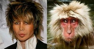 Знаменитости и их двойники из мира животных