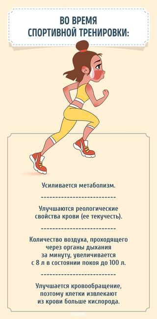 Что происходит с телом, если полчаса в день заниматься спортом