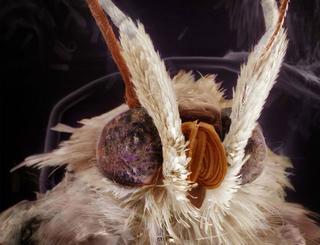 Неожиданные фотопортреты насекомых