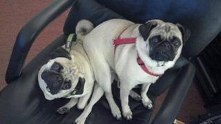25 собак, которые решили, что они могут сидеть там, где им заблагорассудится!