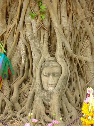 Голова Будды в дереве, Таиланд