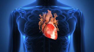 Тренировка для сердца — главной мышцы нашего тела