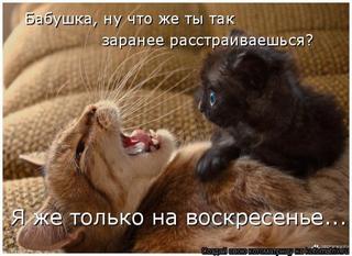 Кошкоматрицы