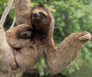 Малыши и мамы из мира животных