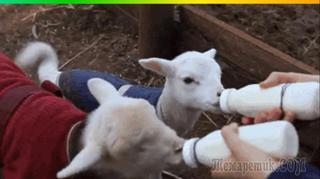 Занимательные животные