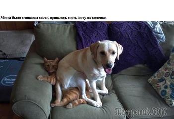 Уморительные моменты из совместной жизни собак и кошек