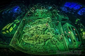 Победители конкурса подводной фотографии в 2018 году