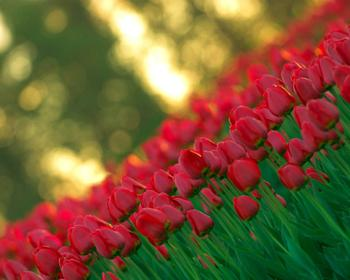Какие цветы посадить осенью на даче, особенности посадки под зиму