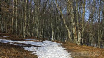 Весна идет. Крым. Чатыр-Даг. 27-е февраля