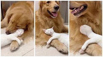 Настоящая дружба между кошкой и собакой