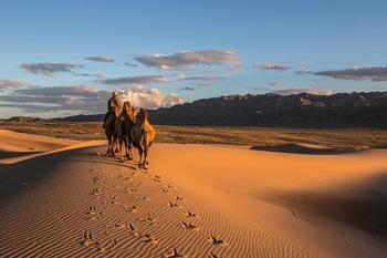 Сокровища пустыни Гоби