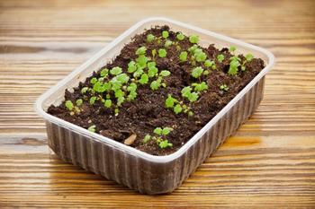 14 правил, которые вы должны соблюдать при выращивании рассады в домашних условиях