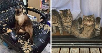 Коты, которые прекрасны просто тем, что они есть