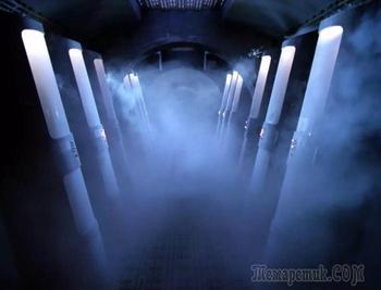 Изучение медуз, криогенная заморозка и другие безумные способы обрести бессмертие