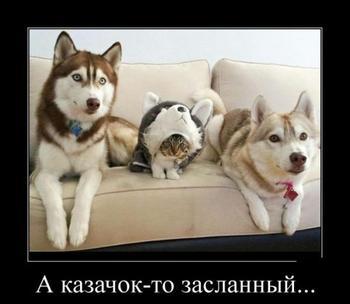 Демотиваторы-позитивчик;))