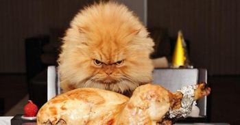 Почему некоторые люди сердятся, когда голодны?