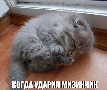 15 самых смешных открыток с котиками