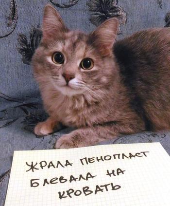 Котики, уличённые в проступках