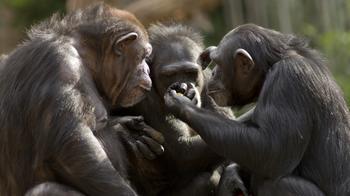 Топ-10: Удивительные способы, которыми животные доказывают, что они умнее, чем вы можете себе представить