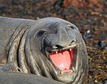 Улыбающиеся животные, глядя на которых вы сами расплывётесь в улыбке
