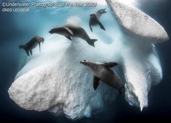 Победители конкурса на лучшую подводную фотографию 2020 Underwater Photographer Of The Year