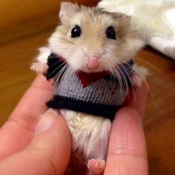 Милые животные в очаровательных свитерках