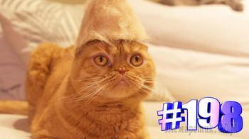 Свежая видео подборка о котиках от котомании #198