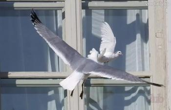 Примета: птица ударилась в окно и улетела – положительный или отрицательный знак?