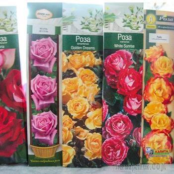 Как спасти розы из коробки
