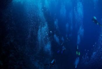 Удивительные глубоководные создания