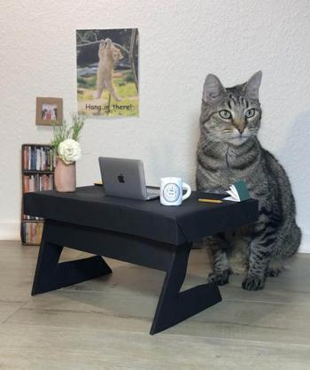 17 доказательств, что человечество только и делает, что поклоняется котикам