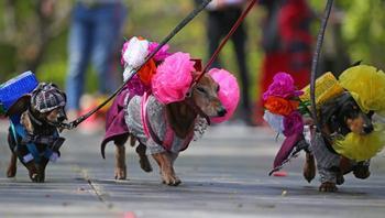 Самые необычные парады и флешмобы в России