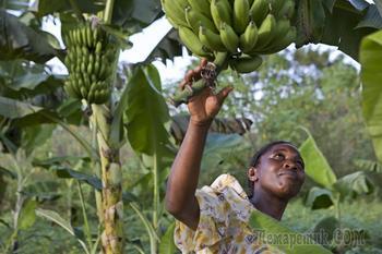 12 фактов об Уганде — жемчужине Африки