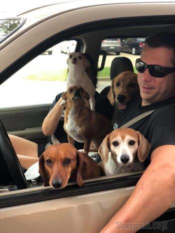 19 раз, когда люди случайно встретили собак в неожиданном месте и это событие они запомнят надолго