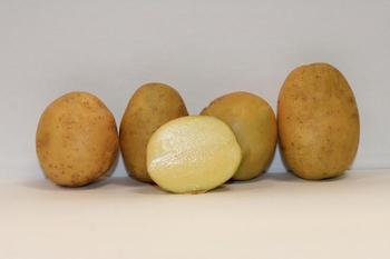 Что нужно знать о картофеле Импала