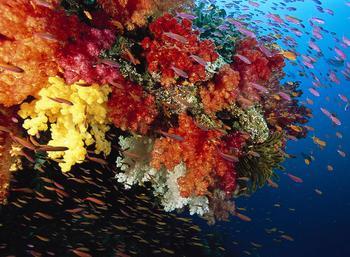 Кораллы — древнейшие существа на Земле