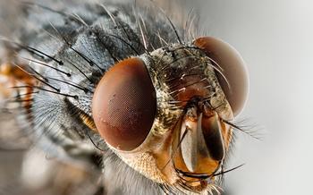 Тайны насекомых: сколько глаз у обыкновенной мухи
